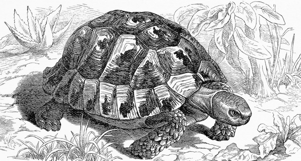 The Tortoise Model of Perception